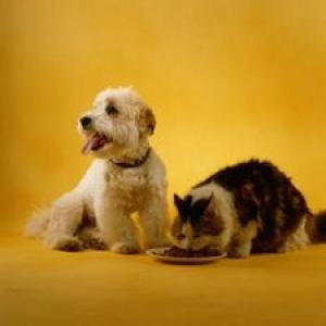 Reclame salbatice: Cum sunt ademenite animalele de companie