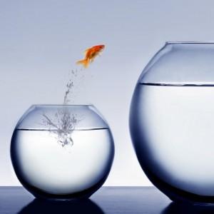 Dezvolta imaginea afacerii tale in 5 pasi simpli