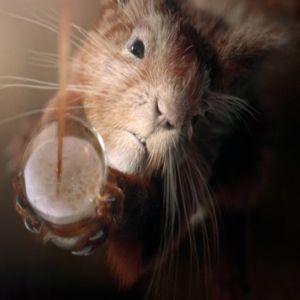 Reclama zilei: Legatura dintre o veverita si bere
