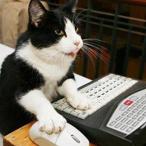 Cum ar arata saptamana la birou daca ai fi pisica
