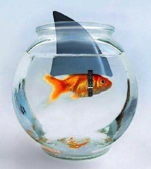 Perceptia: Cheia imbunatatorii fiecarei fatete a afacerii tale