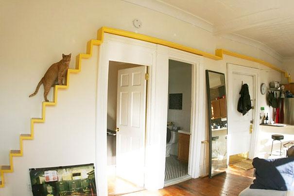 scara interioara pisici