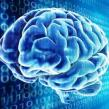 Primul creier artificial capabil de invatare, de la Google