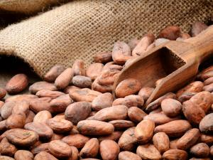 Brandul Hershey promite ca va renunta la sclavia copiilor in productia de cacao pana in 2020